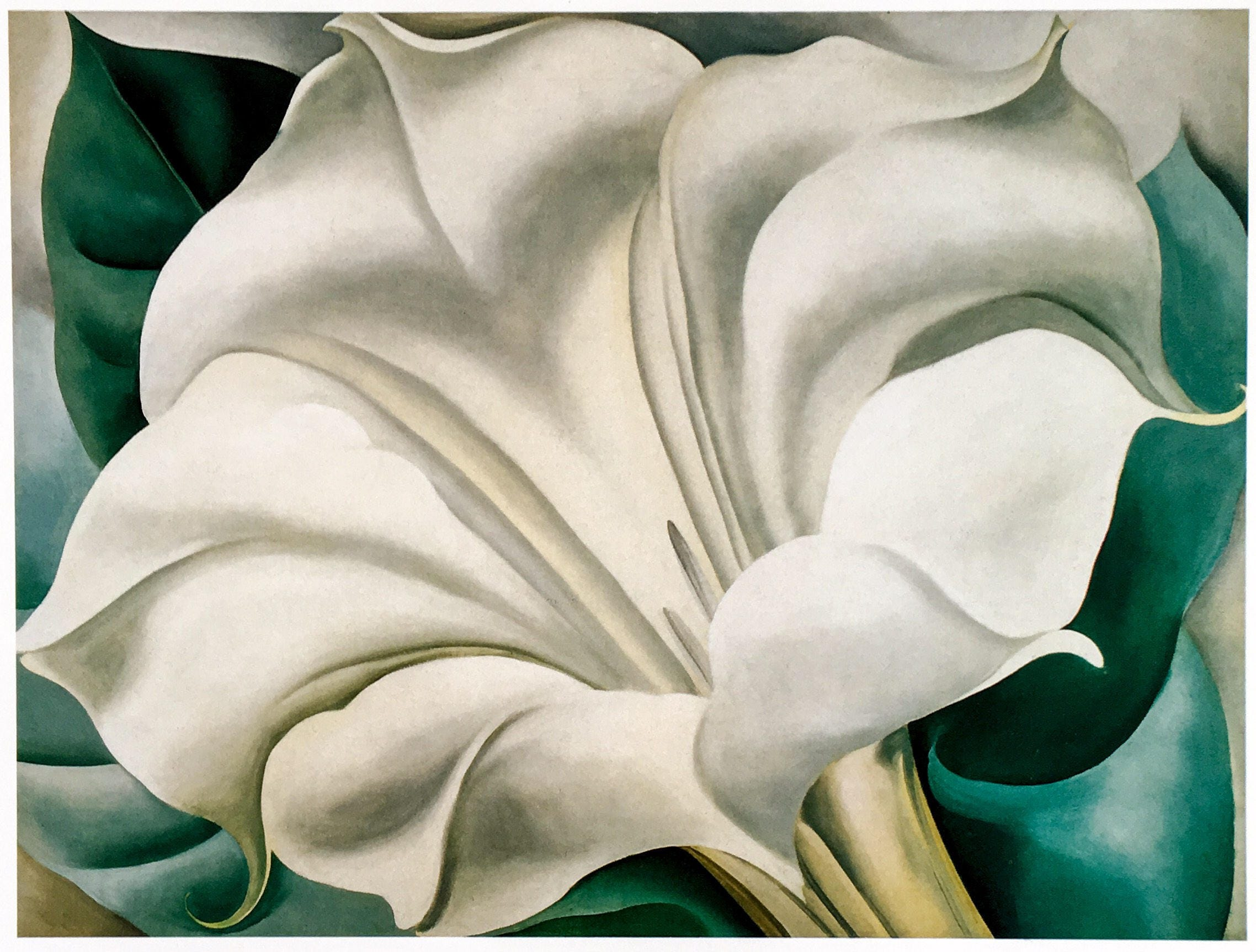 Georgia o keeffe white trumpet flower choice image flower modern georgia o keeffe white trumpet flower photos wedding and luxury georgia o keeffe white trumpet mightylinksfo