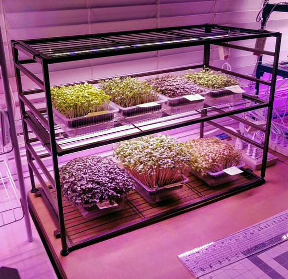 Restaurant & Commercial Microgreen Starter, Trays, Lights, Rack, Scale, Seeds, Media 100+ crops