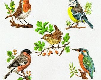 2 Sets of 5 Garden Birds, Bullfinch, Bluetit, Kingfisher, Robin, Wren ENAMEL DECALS TRANSFERS Small