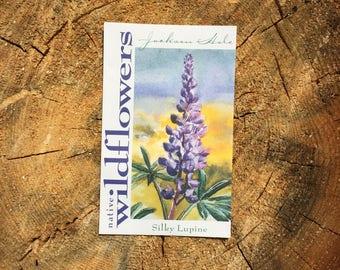 Silky Lupine Wyoming Wildflower Seeds