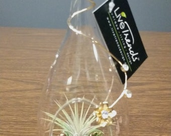 Allure Tear Drop Air Plant with Gems