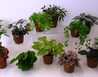 """6 Potted Plants with """"FREE"""" Shipping!!!"""