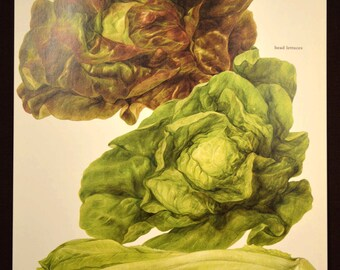 Lettuce Print Kitchen Wall Decor Art Vegetable Food