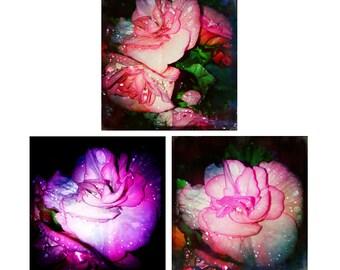 Photography Print Set, Flower Art Set, Colorful Floral Art, Nature Photography Set, Large Wall Art, Fine Art Prints, Set of 3 Prints