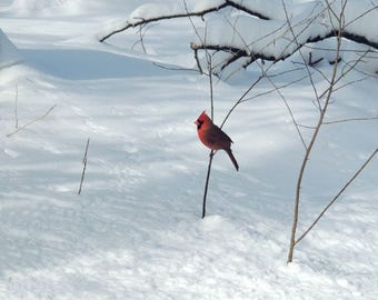 Bird Photograph - Snowy Winter - Red Cardinal - Winter Bird - Landscape - Winter Red - Bird Art Gift - NY Cardinal - Nature Photograph