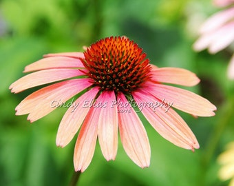Blank Card, Flower Note Card, Photo Note card, Note Card, Greeting Card, Flower Photo Print, Photography, Cone flower, Orange pink, Flowers