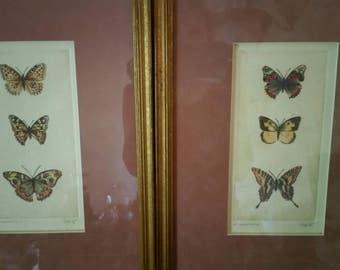 Vintage signed artist proof etchings, Butterflies A & B, 1980's, Sandy Scott