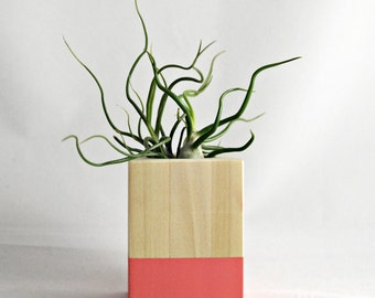 Coral // Wood Air Plant Planter - with Tillandsia Bulbosa
