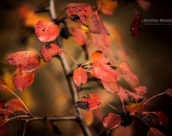 Autumn Leaves | Photography | Limited edition