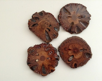 Hand Crafted...... Luxury.... Australian Banksia Nut  Coasters..... x 4.....Hostess Gift.....