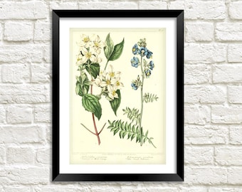 WHITE FLOWER PRINT: Vintage Floral Art Illustration Wall Hanging (A4 / A3 Size)