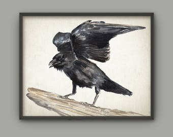 Raven Watercolor Art Print, Crow Bird Painting Wall Art Poster, Gothic Decor, Black Bird Home Decor, Northwest American Crow Ornithology B12