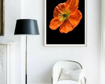 Orange Poppy Print Flower Wall Art Dark Floral Art Fine Art Photo Floral Gift For Her Botanical Still Life Photo Orange Living Room Decor