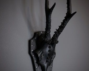 Gothic Roe deer skull antlers taxidermy decor
