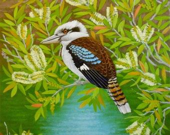 Kookaburra in flowering paperbark