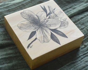 Azalea Flower Ink Drawing Fine Art Print on Wood Block - Gallery Wall Collection or Ornament