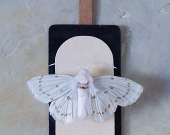 Faux Taxidermy / Paper Taxidermy / White Moth / Moth Art / Moth Faux Taxidermy / Paper Wall Art / Moth Wall Art / Fake Taxidermy /Paper Moth