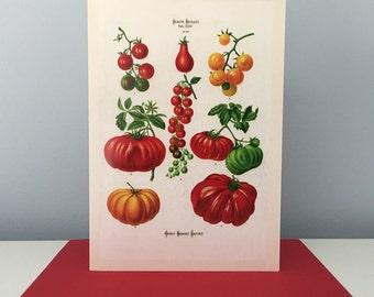 Vintage Tomato Card, Tomato Still Life Card, Thank You Card, Greeting Card, Teacher Card, Professor Card, Gardener Card, Gardening Card