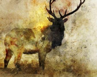 Calm Deer 03: Giclee Fine Art Print 13X19