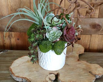 Faux Succulents And Air Plant In White Textured Container