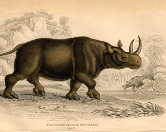 1836 RHINOCEROS engraving antique print two horned african rhino