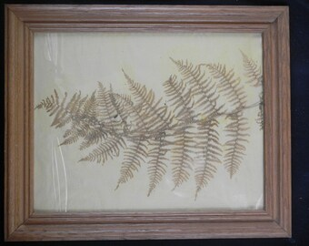 Pressed Fern Leaf, Dried Botanical in Oak Frame