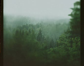 7x7, 15x15 in., Norway, Rainy, Woods, Landscape, Photography Art Print, Norwegian Nature, Green, Forest, Scandinavian, Home Decor, Trees