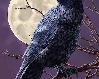 Bodega Bay, California - Raven (Art Prints available in multiple sizes)