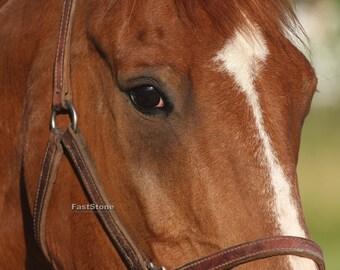 Horse, animal, photo, prints, nature photo, home decor, wall art, animal photography, free shipping, metal