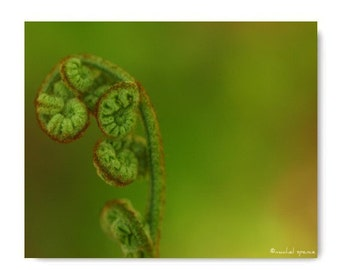 Fern in the Forest Photograph...Affordable Home Photography Prints Nature Photography Decor Nature Lover Woodland Scene
