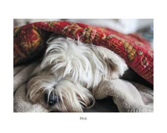 Westie Dog Card - Blank Inside - Get Well Greeting Card - Healing Card