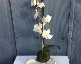Moss Art, Kokedama, Ikebana, Preserved- NO MAINTENANCE, Zen Garden, Moss, Faux Orchid, Genuine Deer Bone, Woodland, Tabletop Sculpture