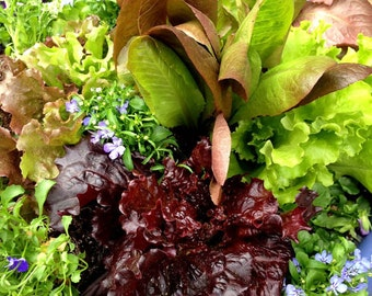 Salad Collection, Gourmet Lettuce Blend,  Lettuce Mix Seed, Nasturtium Seeds, 3 Heirloom Seed Varieties, Great for Container Gardens