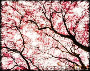 Spring Photography, Cherry Blossom Art, Spring Cherry Blossoms, Sakura Art, Pink Wall Art, Pink Art, Spring Tree Silhouette Print