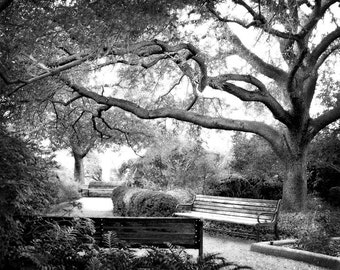 Black and White Photography - Meander - 8x10 Fine Art Photo - Landscape Photography, Tree, Leaves, Park Bench - Affordable Home Decor