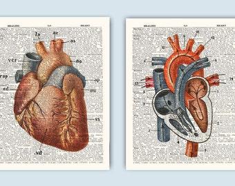 Heart Anatomy Print, Heart  Anatomy Print, Human Anatomy, Educational Prints, Medical Decor, Anatomy Art, Set of 2 Prints, Anatomical Heart