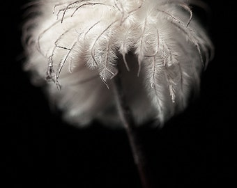Fine Art Photography, Home Décor- Home & living- Flower Photography-floral print-Fine Art-White Flower Print-Floral Wall Art-