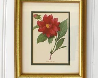 Dalea Double Matted and Framed Botanical - Gold Frame