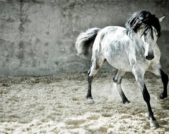 VIDA, Andalusian Horse, Dapple Grey, Edition Art Print, Wall Decor, Equine Art, Horse photography