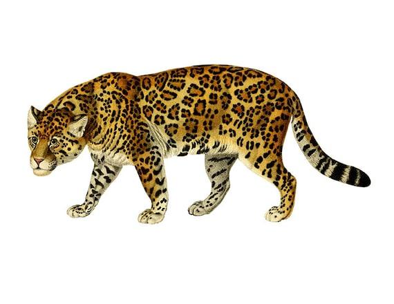 vintage jaguar clipart jaguar clipart children s wall art from rh etsystudio com jaguar clip art free jaguar clipart easy