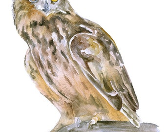 Horned Owl Watercolor Painting - 8 x 10 - Giclee Print - 8.5 x 11