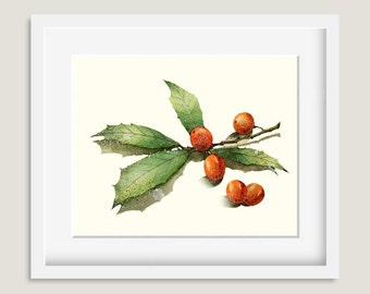 Watercolor Painting - Christmas Holly Painting - Watercolor Holly - 8 by 10 print - Archival Print, Holiday Decor, Holiday Art