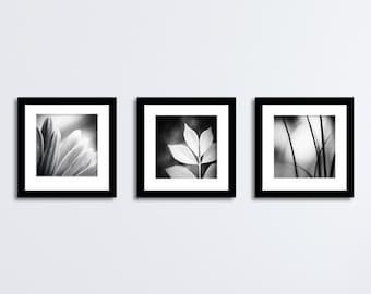 Black and White Photography Set - 12x12, 10x10, 8x8, 5x5 Nature Prints modern gallery wall photographs dark grey gray artwork neutral photo