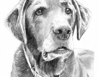Custom Dog Pet Portrait Pencil 8x10 graphite pencil