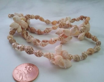 Seashell mix drilled shells by the strand organic gems