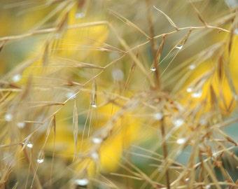 Yellow Rain - Reed - Raindrop - Dew -  Wall Decor - Abstract Art - Rainy Day - Romantic Summer Rain - Nature Photograph