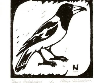 Young Butcherbird - Limited Edition Original Linocut Print - image size 15x15cm (6x6 inches)