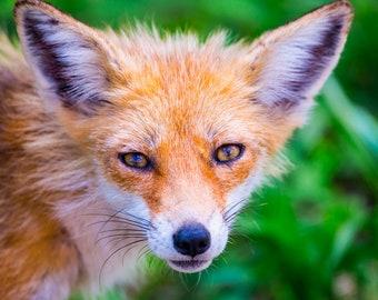 Soul of the Fox