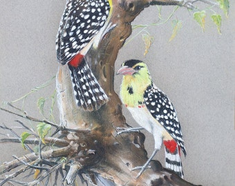 BIRD LOVERS ARTWORK D'Arnauds Barbet print, Chalk Pastel Drawing Red Black White yellow Nature wall art  tree leaves feathers Africa branch