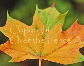 Maple Leaf Photo Card Autumn Colors Greeting Card